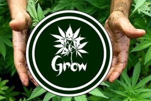 Grow 1